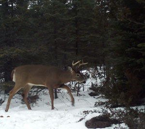 6-pointer in January