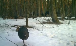 Spring Turkey Thaw